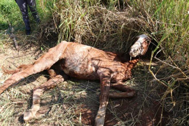 Moradores denunciaram situação de maus-tratos contra cavalo em Osvaldo Cruz, SP