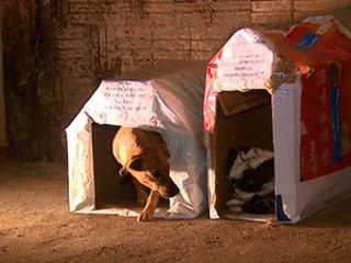 Animais de rua ganham casinhas de papelão para se protegerem do frio em Porto Ferreira, SP