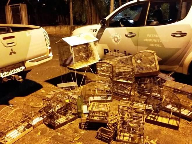 Aves mantidas irregularmente em cativeiro são resgatadas em Presidente Bernardes, SP