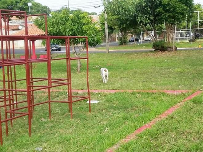 CCZ iniciará em agosto apreensão de cães soltos em Presidente Prudente, SP