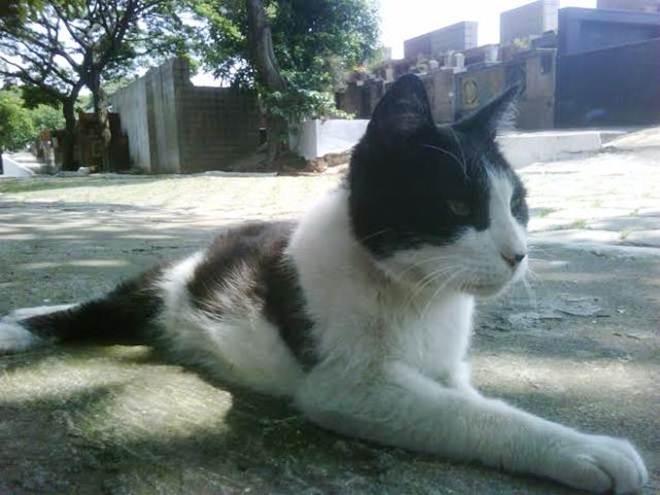 Ritual deixa 40 gatos sem coração e cabeça em cemitério de Ribeirão Preto, SP