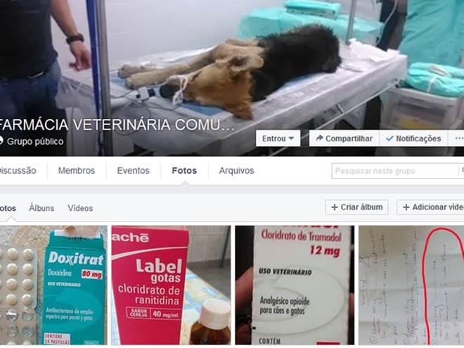Internautas mantêm 'farmácia comunitária' para animais na web