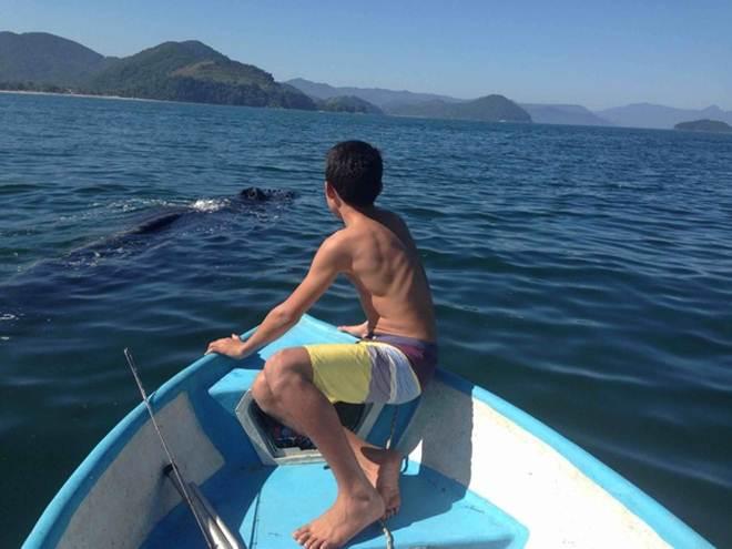 Família salva baleia presa em rede de pesca no litoral norte de SP