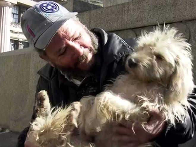 Prefeitura de SP sanciona lei que libera animais em abrigos