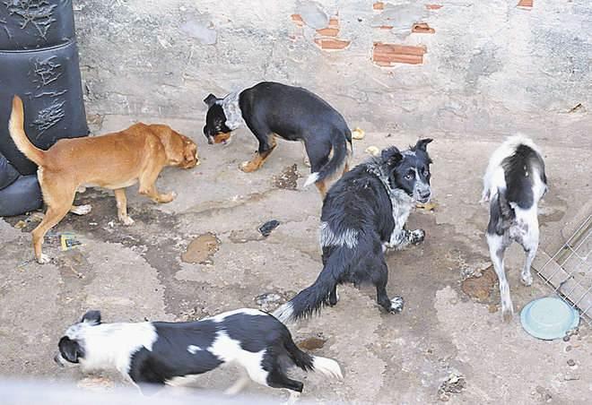 Família se muda e deixa 9 animais na casa antiga em Sorocaba, SP