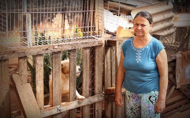 Aposentada que cuida de 42 cachorros pede ajuda, em Tabatinga, SP