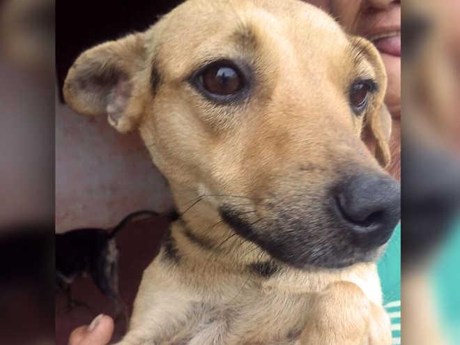 Cadela fica em casa demolida em Araçatuba (SP) à espera do tutor que morreu