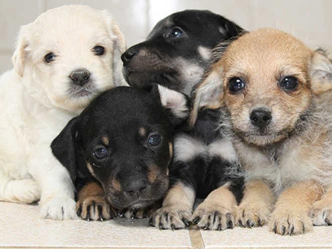 Centro de Zoonoses de Bauru (SP) recebe mais uma feira de adoção neste domingo (3)