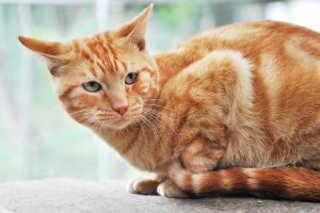 Diadema (SP) terá adoção de animais neste sábado, 23