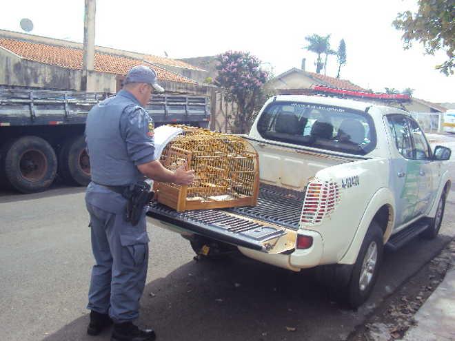 Polícia Militar Ambiental resgata pássaros mantidos em cativeiro ilegalmente em Marília, SP