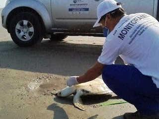 Praias de SP registram mais de mil animais mortos nos últimos 10 meses