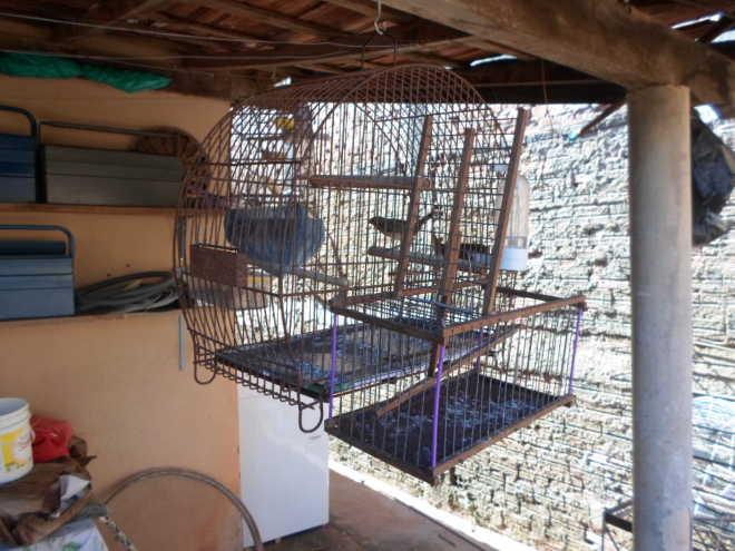 Polícia Militar Ambiental resgata pássaro nativo que era utilizado para captura de outras aves em Marília, SP