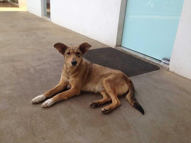 Casal que perdeu cão durante viagem para RO é procurado nas redes sociais