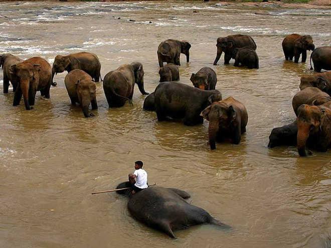 Pensando em fazer trekking com elefantes neste verão? Aqui está o que você precisa saber antes de reservar!