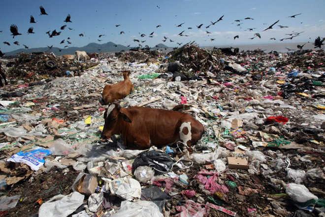 Esta triste imagem revela a extensão do problema com o nosso lixo… e os animais que são afetados por isso