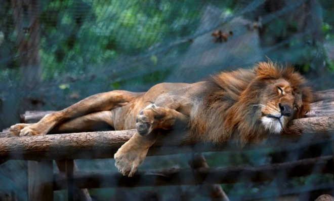 Animais morrem de fome em zoo de Caracas, na Venezuela
