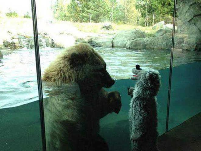 Urso olha menino através de recinto de vidro em zoológico nos mostra como não ensinar as crianças sobre os animais