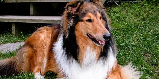 Cachorro morre depois de 9 anos se recusando sair de perto da sepultura do tutor