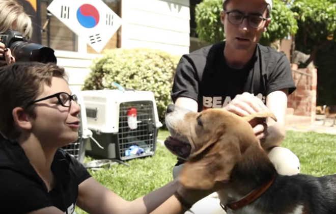 Após anos sofrendo em laboratórios de pesquisa, animais resgatados finalmente sentem o gosto da liberdade