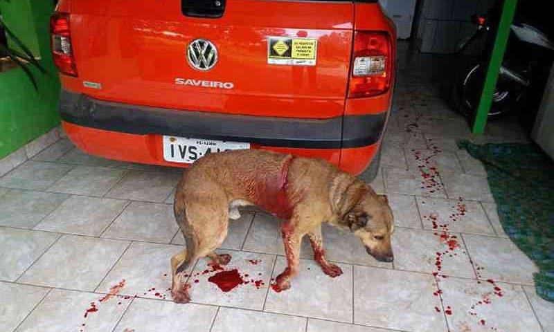 Homem dá facada em cachorro e causa revolta em Vanini, RS