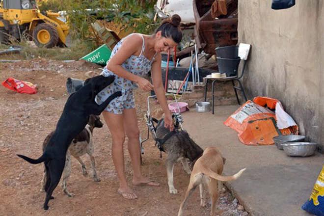 ONG AUAU enfrenta sérios desafios para manter animais que são atropelados ou vítimas de maus-tratos em Brumado, BA