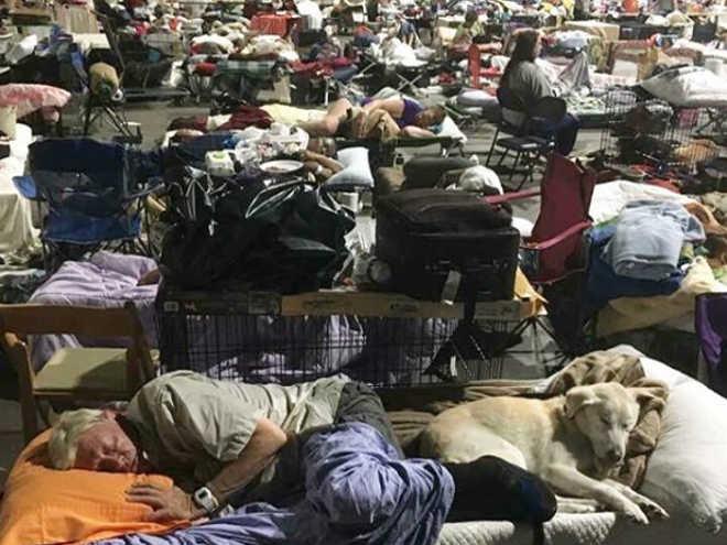 EUA: Louisiana está ficando sem lugar para os animais resgatados de enchentes