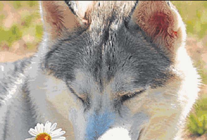 Prefeitura de Belo Horizonte (MG) institui Dia Municipal da Defesa Animal