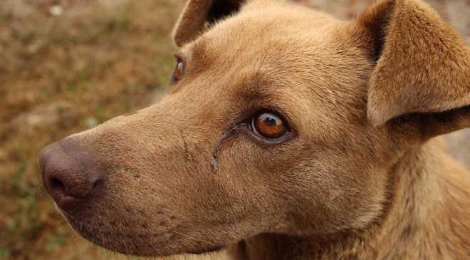 Evento arrecada dinheiro para ajudar ONG de animais abandonados em Mandaguari, PR