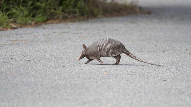 Saiba o que fazer quando vir animais na estrada