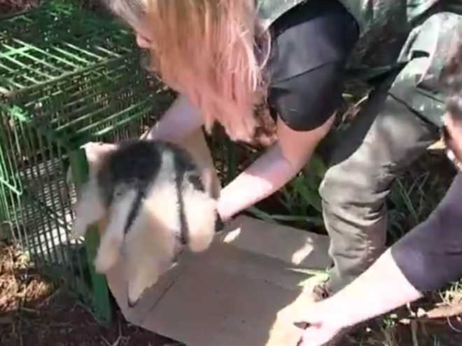 Polícia Ambiental solta três animais silvestres em mata na região de São José do Rio Preto, SP