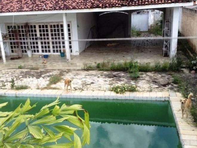 OAB resgata quatro cães abandonados em residência; quinto animal estava morto