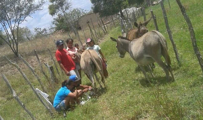 Projeto JODAC chama a atenção para crimes de maus-tratos contra animais em Traipu, AL