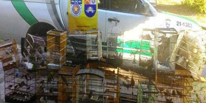 BPA combate tráfico de animais silvestres no interior de Alagoas
