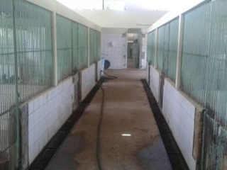 Vergonha: Centro de Zoonoses tem quatro cavalos sequestrados durante a madrugada em Maceió, AL