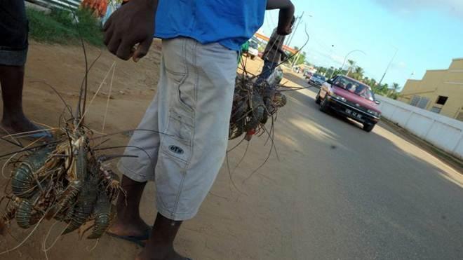 Angola proíbe venda de animais selvagens na estrada para travar caça furtiva