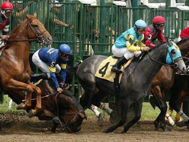 Corrida de cavalos: corações gigantes que morrem e explodem