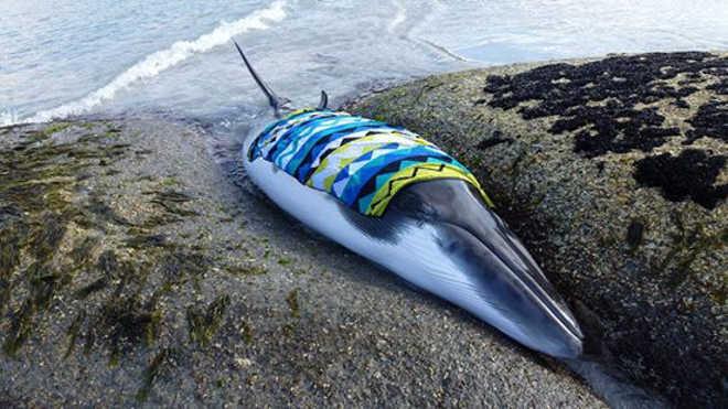 Pessoas confortam baleia encalhada enquanto ela espera pela ajuda