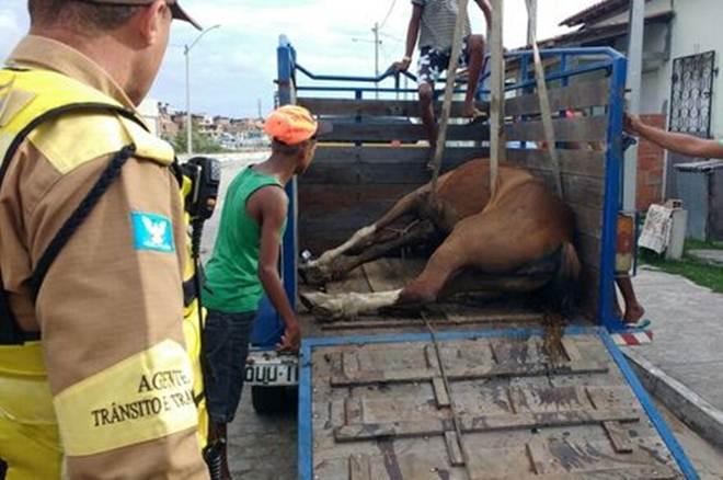 Égua grávida é resgatada no bairro de Massaranduba, em Salvador, BA
