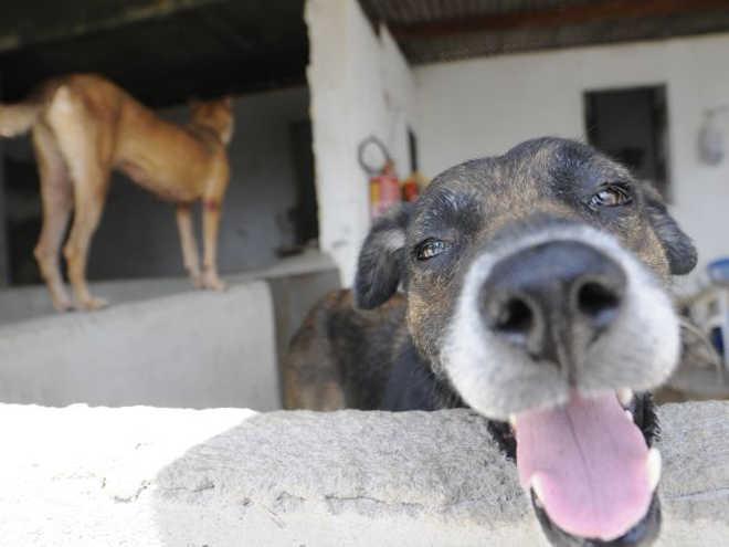 Abrigo em Fortaleza (CE) atinge capacidade máxima de animais e sofre com falta de estoque