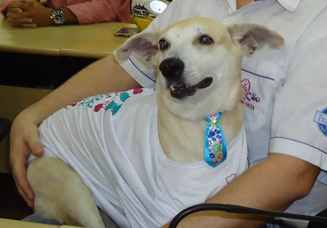 Cachorro agredido por idosa em Cachoeiro receberá alta nesta quarta-feira