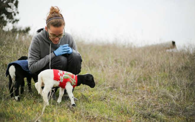 Esta mulher trocou seu sonho de ser diretora prisional para, em vez disso, ajudar os animais