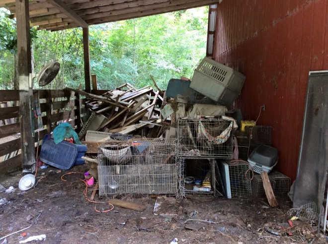 Cães são deixados acorrentados em quintais por tutores que fugiram da inundação em Louisiana, EUA