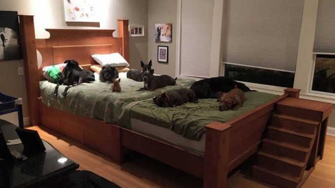 Casal constrói 'supercama' para dividir com seus oito cães resgatados