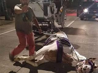 Cavalo cai ao puxar carruagem no meio de avenida de Nova Iorque, EUA