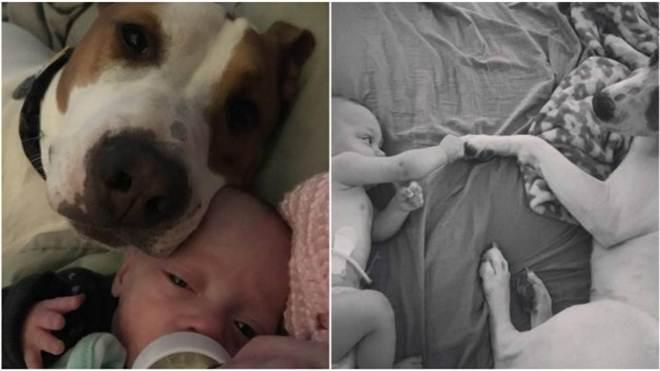 Cão resgatado ajuda a cuidar da filha prematura dos tutores; fotos deles são lindas
