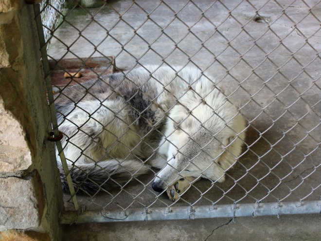 Zoo de beira de estrada fechado após pessoas revelarem o que viram lá