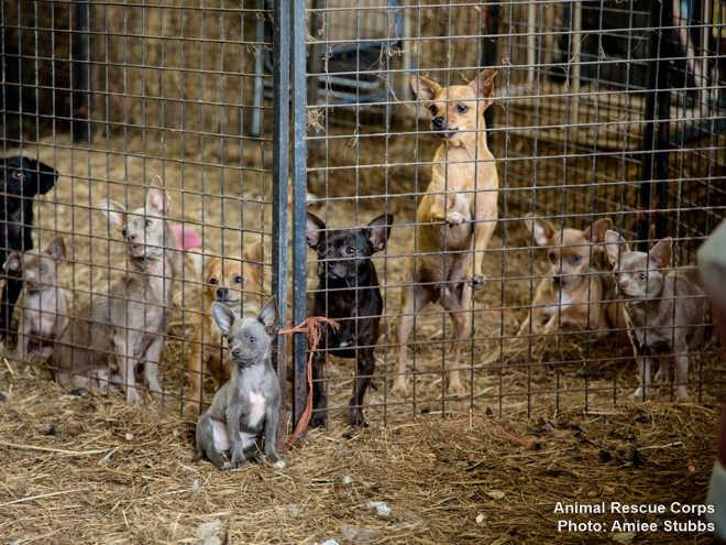 Grupo salva dezenas de animais aterrorizados em um dia – e então recebe uma ligação dizendo que há mais animais