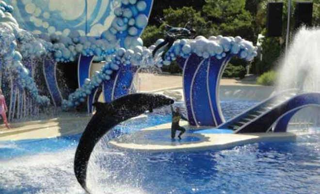 Califórnia proíbe espetáculos com baleias no parque aquático SeaWorld