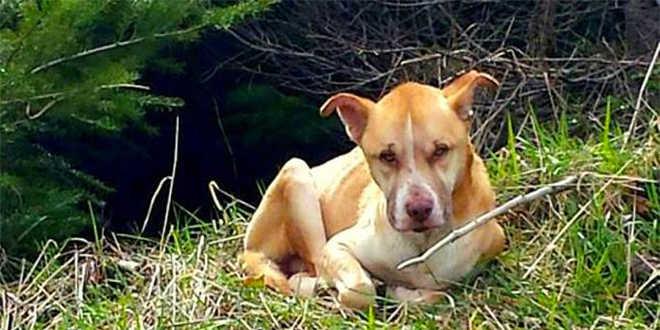 Mulher se deita na rua para ganhar confiança de cachorro e salvar sua vida