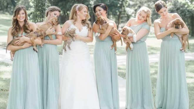 Noiva substitui buquês de flores por filhotes resgatados em fotos de casamento